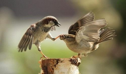 داستانک از پرنده ها بدم می یاد