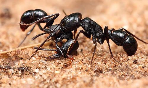 سوالاتی که با دیدن زندگی مورچه ها به ذهن آدم خطور میکند