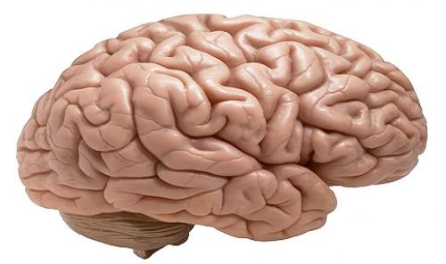 تفاوت هاي مغز زنان و مردان