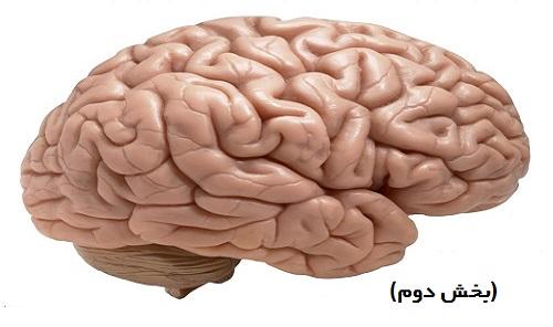 مغزهای سه گانه (بخش دوم)