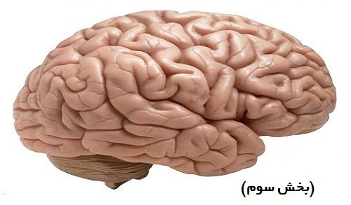 مغزهای سه گانه (بخش سوم)