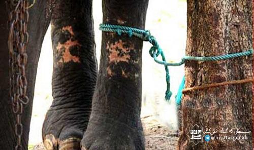 داستان اخلاقی (فیل و تصورش)